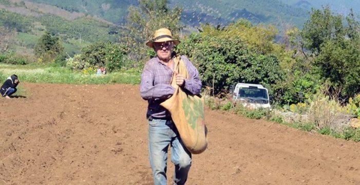 Aprueban un plan para recuperar el cultivo de cereales en La Palma