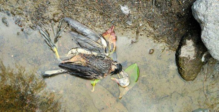 Investigan el posible envenenamiento masivo de animales en Anaga