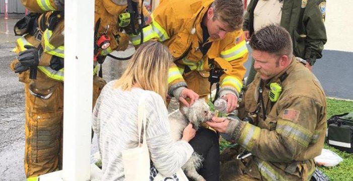 Un bombero le salva la vida a un perro tras reanimarle durante 20 minutos