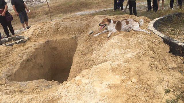 Un perro corre tras el coche fúnebre de su dueña durante tres kilómetros