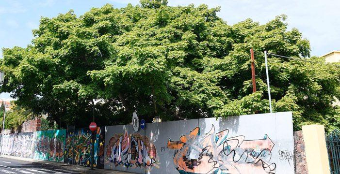 Los monumentos vegetales que dan vida a Santa Cruz