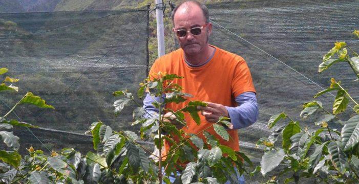 Recuperan la semilla de café de La Palma que estaba casi extinguida