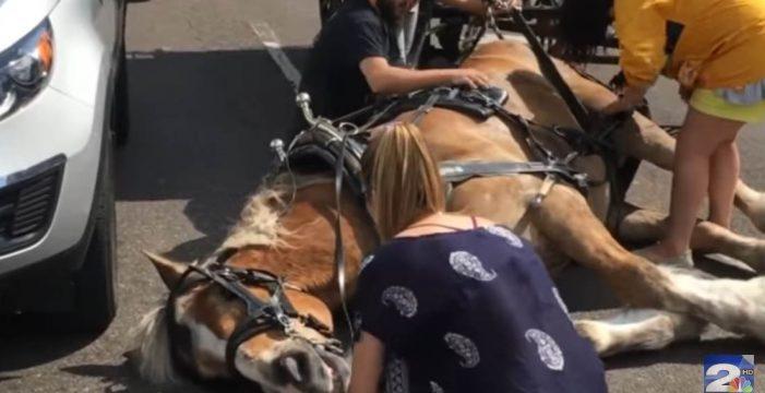 Un caballo se desmaya de agotamiento mientras llevaba un carro con varias personas