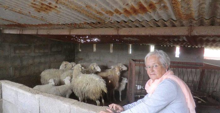El PSOE pide solución ante los ataques a ovejas de raza palmera