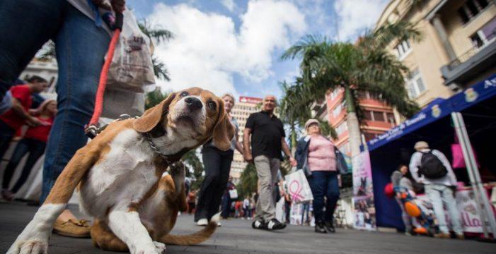 La capital sanciona con hasta 15.000 euros el abandono de mascotas