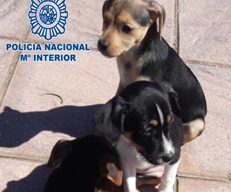 Detenido por abandonar a tres cachorros dentro de una - Policia nacional cadiz ...