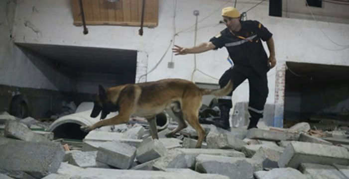 """Premio """"Perro del año"""" a un can de la UME por su actuación en Los Cristianos"""
