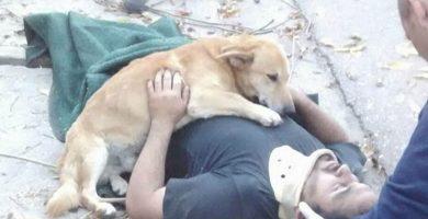 Tony, el perro que acompañó a su dueño accidentado. FOTO Defensa Civil Bahía Blanca