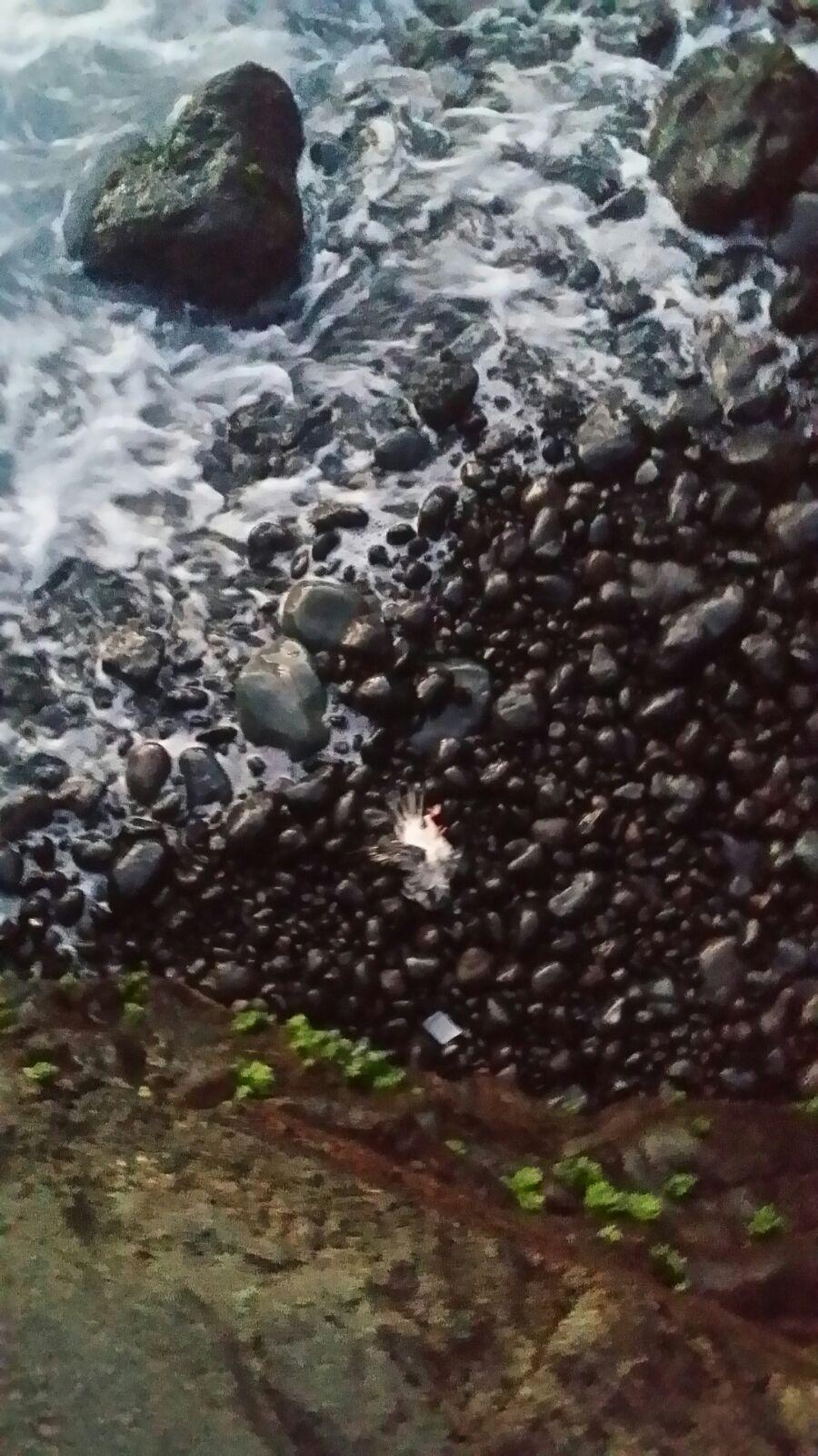 Aparecen palomas decapitadas en el mar en gu a de isora los jardineros diario de avisos - Jardineros tenerife ...