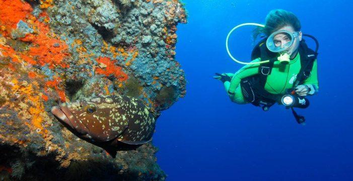Tenerife crea un 'catastro' marino pionero en el mundo