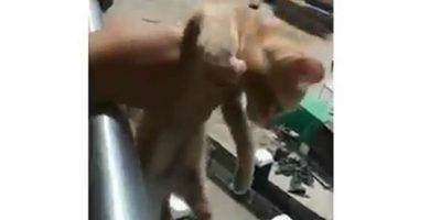 """Conmoción en Panamá: """"Lo matamos para ver qué se sentía matar a un gato"""""""
