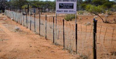 Virus letal para acabar con poblaciones de conejos en Australia