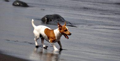 Unas seis playas de las Islas Canarias admiten perros