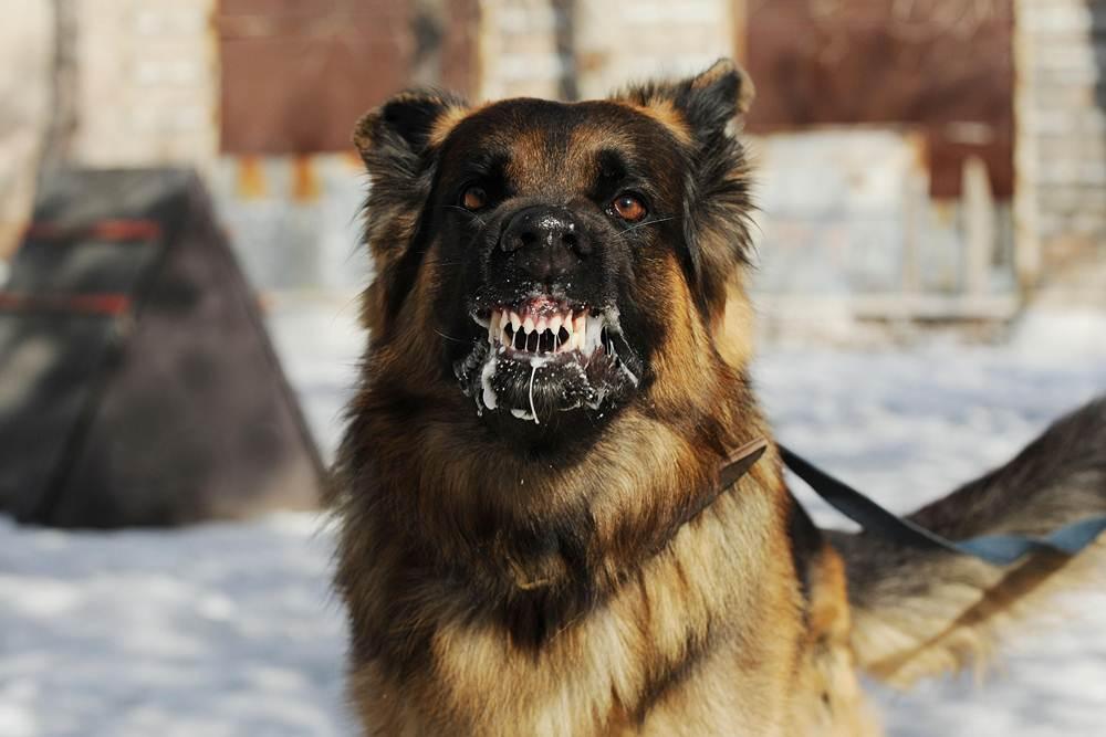 Heavy Breed Of Dog
