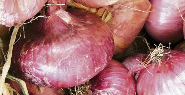 Cebollas tradicionales de Tenerife. Estamos en tiempo de cebollas