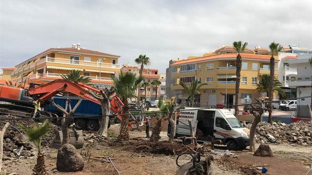 Las obras del centro cultural de Playa San Juan obligan al traslado de ficus y palmeras