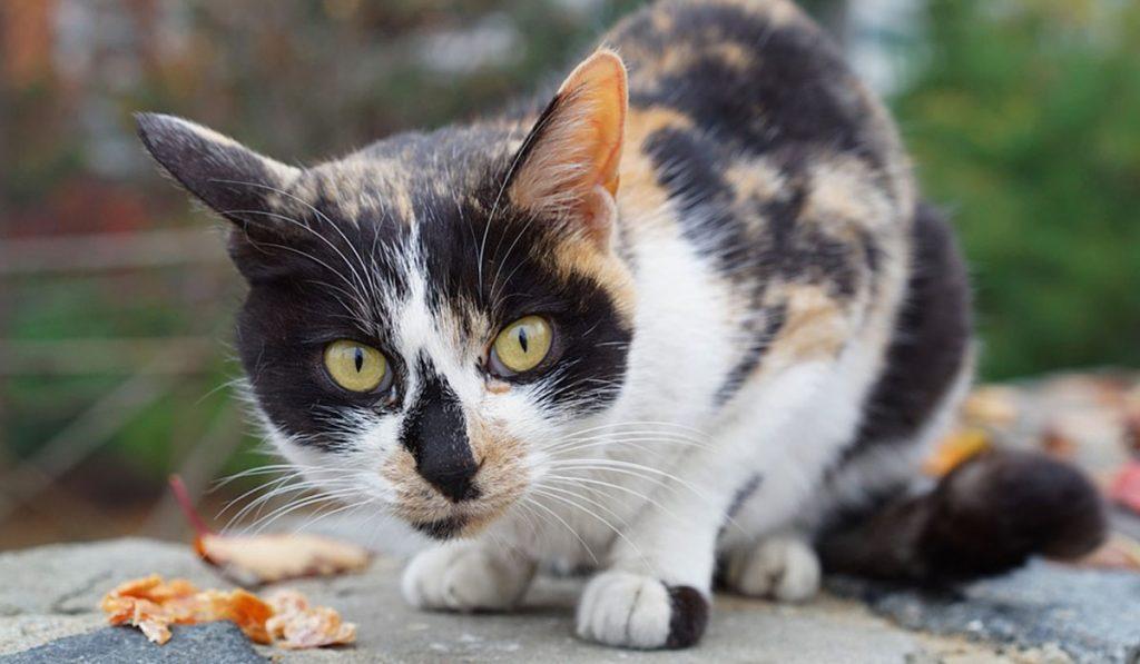 Imagen de archivo de un gato. DA