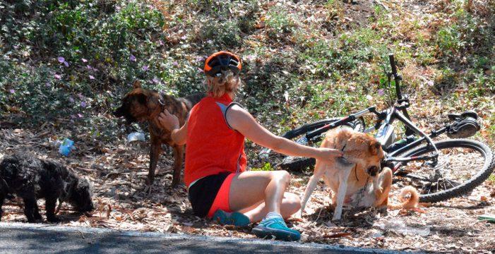 El perro que salvó la ciclista