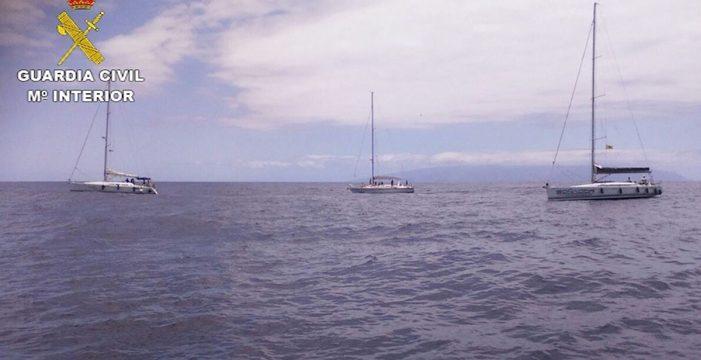 Denuncian a seis empresas que realizan excursiones para observar cetáceos en Tenerife