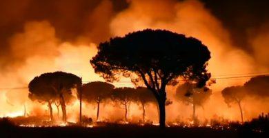 Catástrofe en Doñana: Solo 14 linces pudieron ser evacuados del centro de cría ante la llegada del fuego