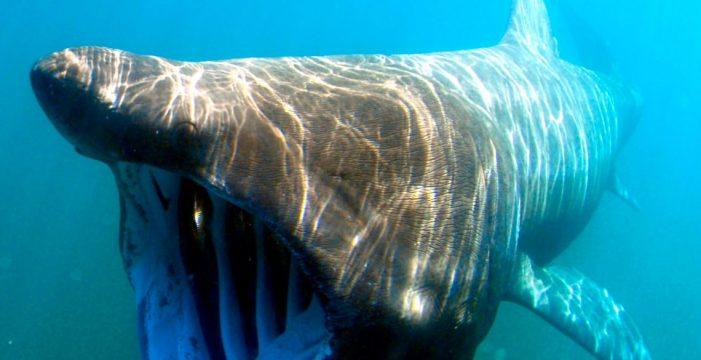 Las 10 especies de peces más curiosas de Canarias