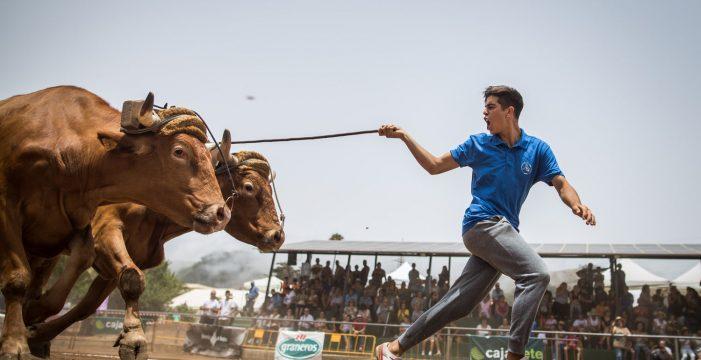 Los Realejos celebra este sábado su Feria de Ganado, acompañada de la gastronomía local