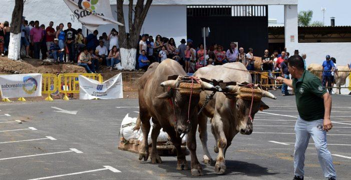 El Sauzal recibe una jornada de arrastre previa a San Benito