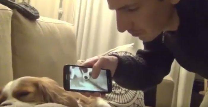 La reacción de un perro a sus ronquidos que arrasa en Twitter