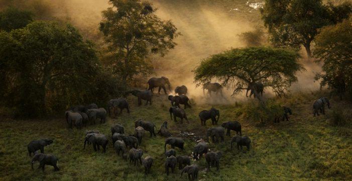 Los héroes que salvan a elefantes y rinocerontes de la extinción