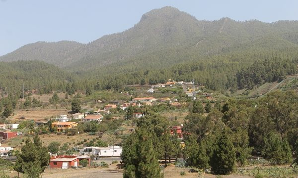 La tala de pinos para prevenir incendios, solo en zonas de cultivo