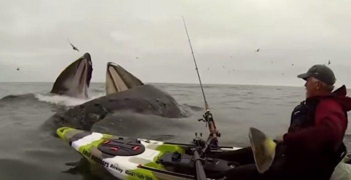 Una travesía tranquila en Kayak hasta que llegan las ballenas
