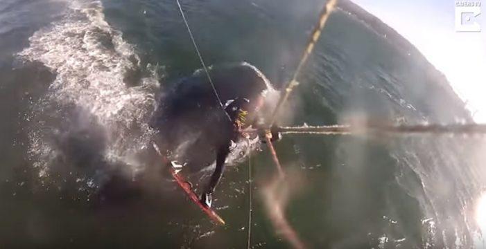 Un kitesurfista choca accidentalmente contra una gran ballena