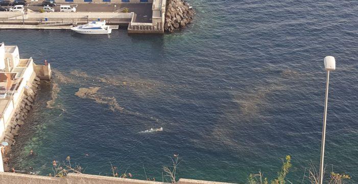 Sanidad desaconseja el baño en las playas que se vean afectadas por microalgas