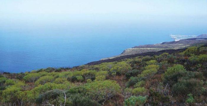 Los ecologistas rechazan Aridane Golf y los otros 3 campos previstos