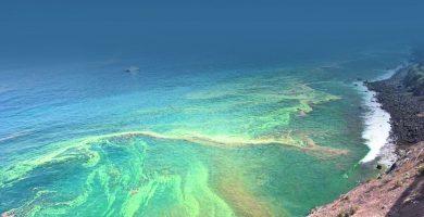 Microalgas en el sur de Tenerife, en las últimas semanas. DA