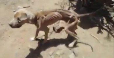 Rescatan a un perro al que unos menores le tiraban piedras por diversión