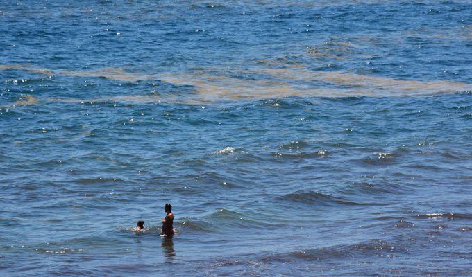 """""""La gestión de la crisis de las microalgas ha sido, como mínimo, errática"""""""