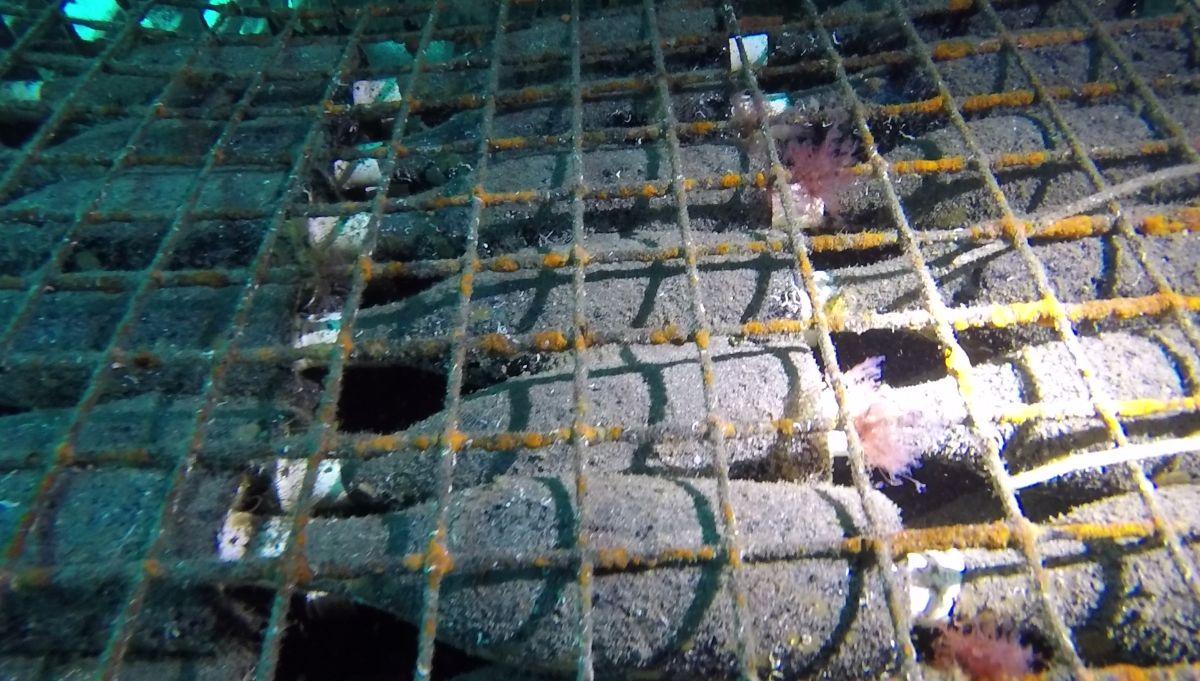 El paso de las corrientes marinas a través de las rejas permite la creación de un ecosistema en su interior. DA