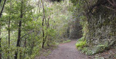 Pista Las Hiedras, en el entorno natural del Parque Rural de Anaga. Foto: Juan González