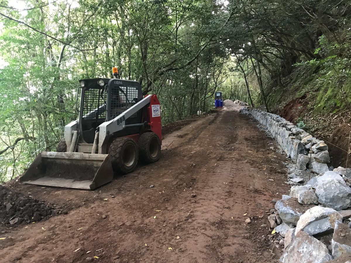 hiedras 4500 Firmas Para Parar El Atentado Ecolgico De Las Hiedras En Anaga