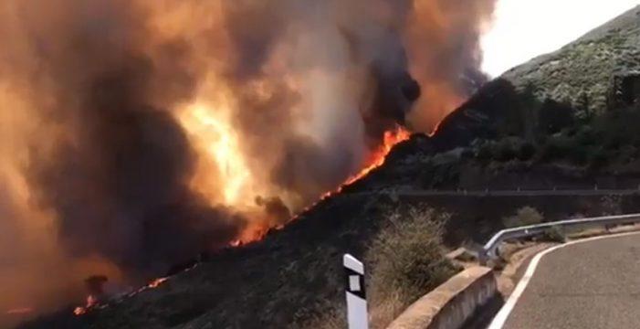 El Cabildo de Gran Canaria denunciará los bulos en redes sociales sobre el incendio