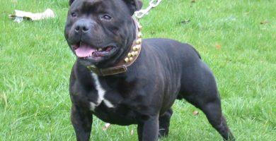 Un perro drogado con cocaína y morfina mata a su dueño