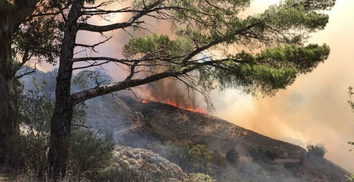 El Gobierno de Canarias aprobará el lunes un decreto de ayudas para los afectados por el incendio
