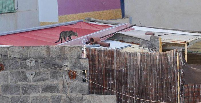 Santa Cruz alcanza un consenso con las protectoras sobre las colonias gatos