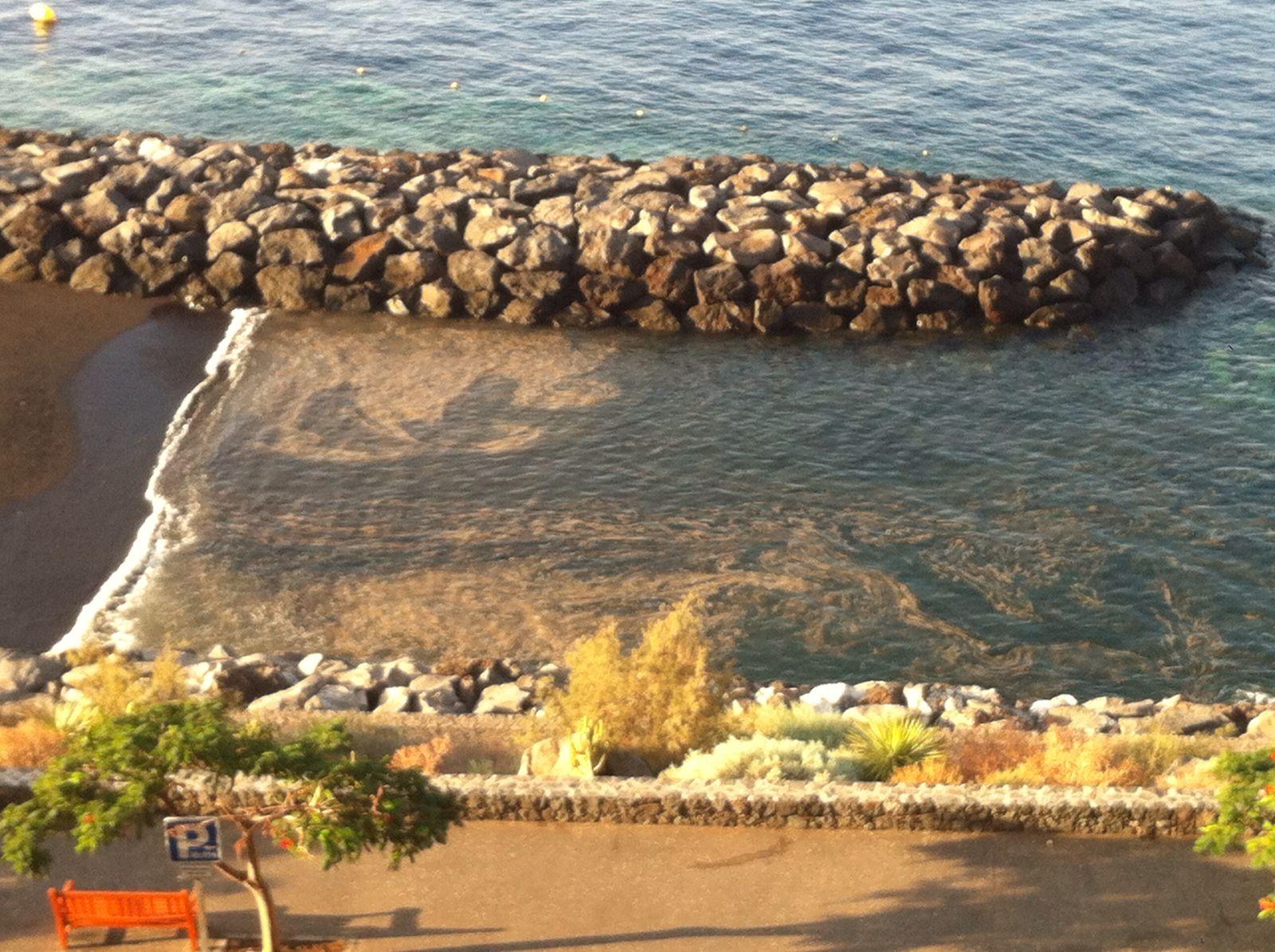 Cianobacterias en la costa de Radazul. | DA