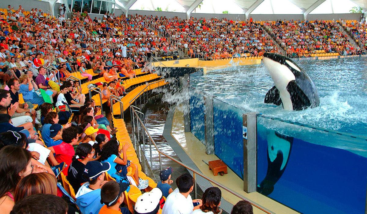 El show de las orcas es uno de los muchos atractivos que el Loro Parque ofrece en sus instalaciones, que en 45 años ha multiplicado por diez su superficie inicial. DA