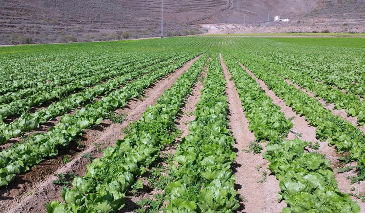Los agricultores esperan que los anuncios de la Administración se cumplan y que antes de fin de año se abra la desaladora de Fonsalía. DA