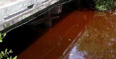 """Las 'mareas rojas' sobre las que alertan expertos causarían """"mortandad de peces"""""""