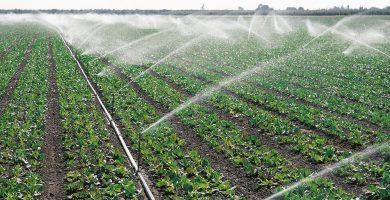 Más de la mitad del agua a la que se da un nuevo uso es destinada al sector agrícola. DA