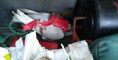 Los reclusos de Tenerife II usan palomas mensajeras para recibir móviles y drogas desde el exterior